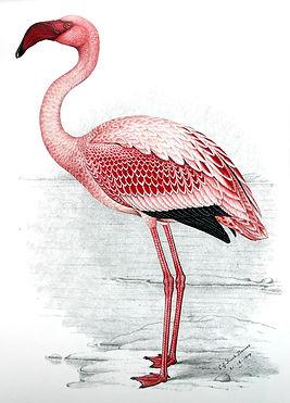 Flamingo original.jpg