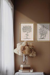 Artemisia SHOW.jpg