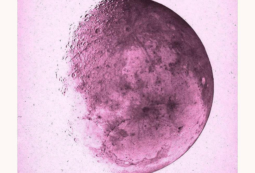 The Moon 1866 Negativ Pink