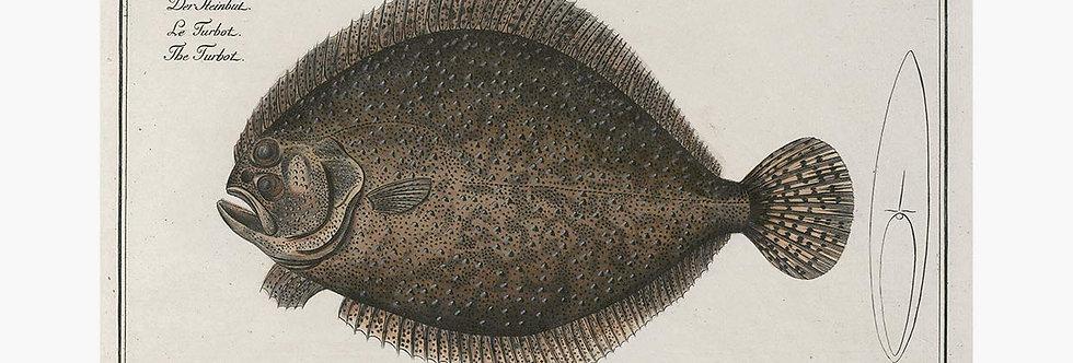 German Fish Illustrations Nr 7