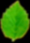 BLAD grønt.png
