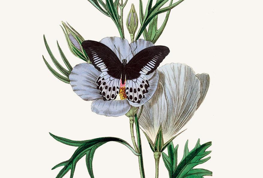 Blomster & Sommerfugle: No. 2