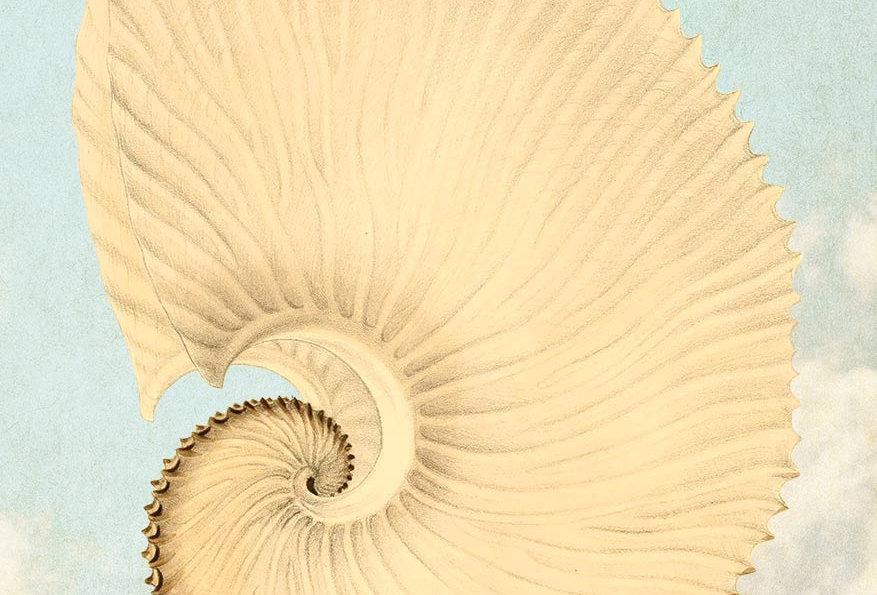 Shells: White shell / skies