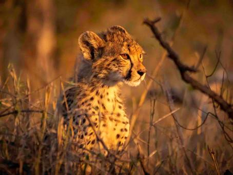7 Weeks in Kruger: The S50 - One of Kruger's Best Kept Secrets