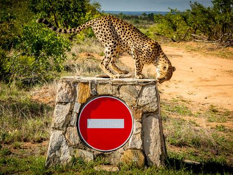 7 Weeks in Kruger: Pretoriuskop and an App update…!