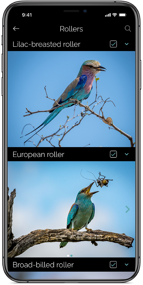 Website 4 - Bird Profile_0.75x.png