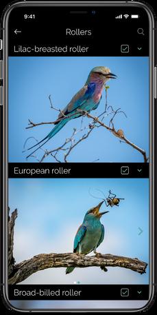 Website 4 - Bird Profile_0.75x.png