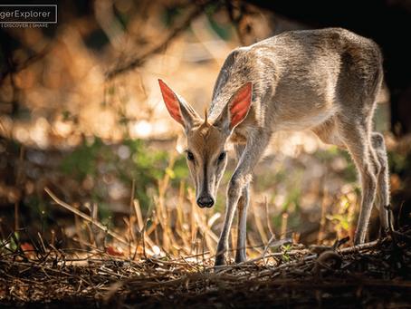 Punda Maria: Exploring the hills of northern Kruger