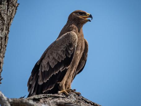 7 Weeks in Kruger: Lower Sabie, Part 2 - The Birds