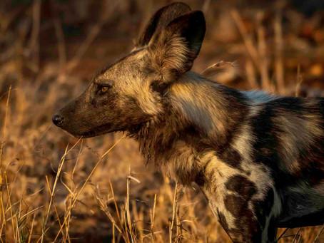 7 Weeks in Kruger: Serendipitous Shingwedzi