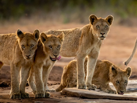 7 Weeks in Kruger: Berg-en-Dal - it's a family affair!