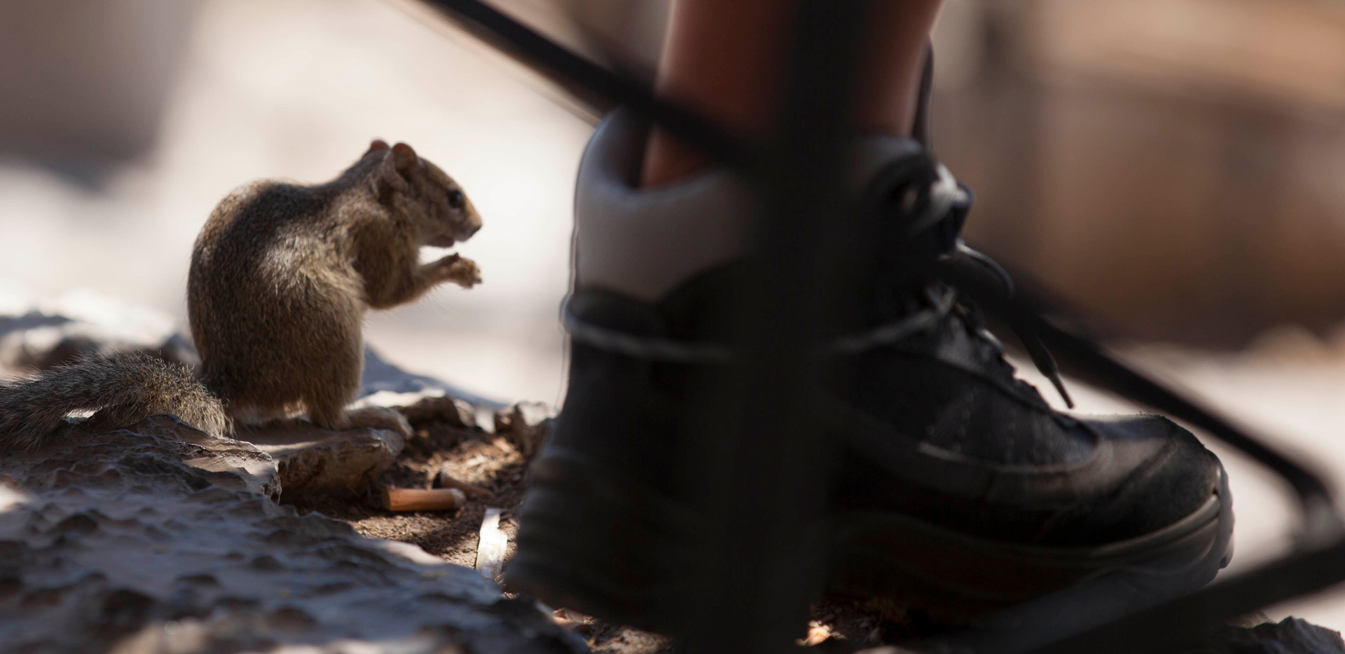 Namibia Squirrel View