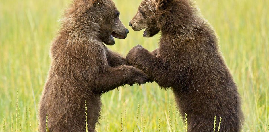 Cub Friends