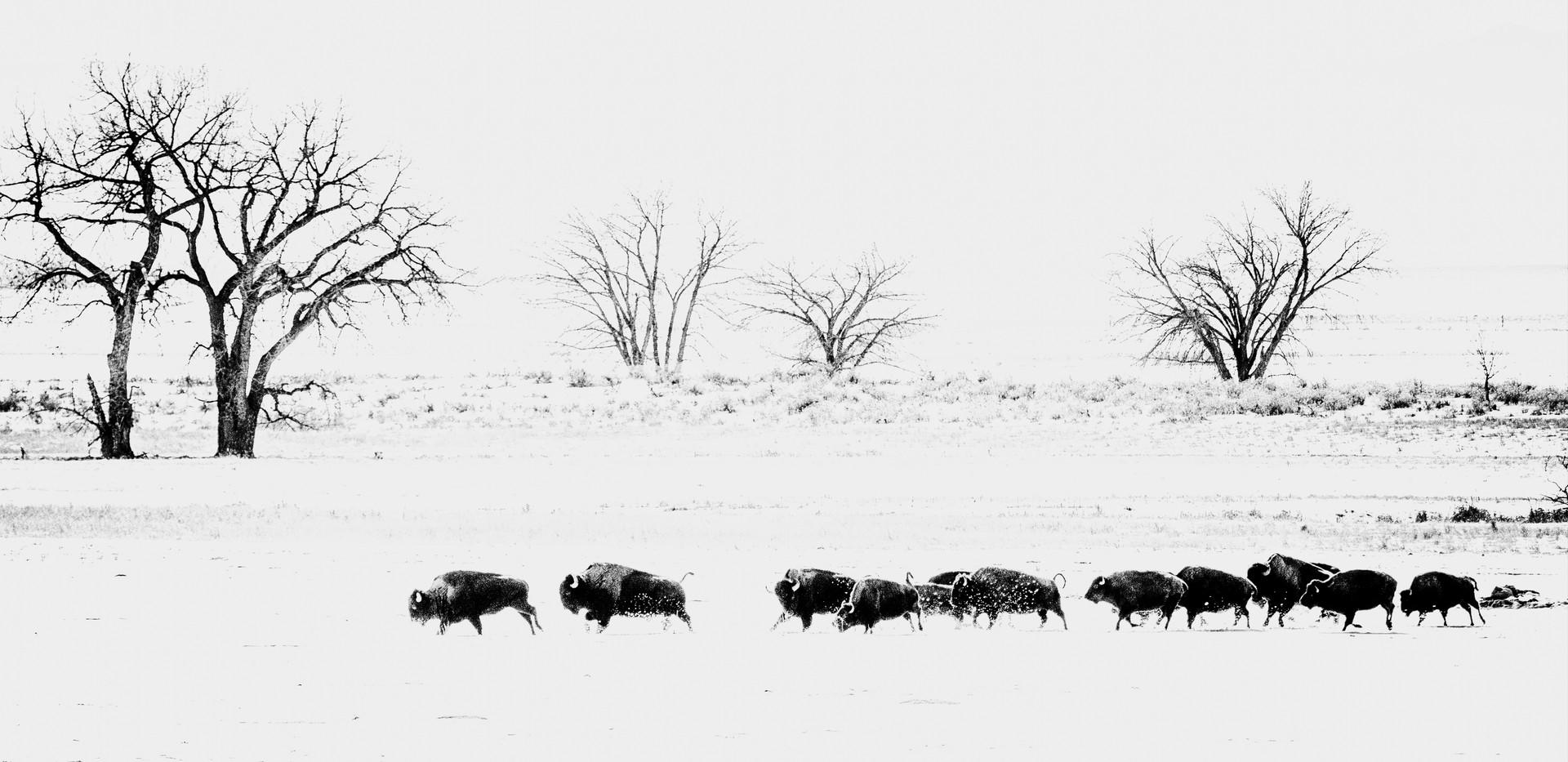 5663 Bison Run.jpg