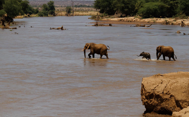 Kenya Elephant Crossing