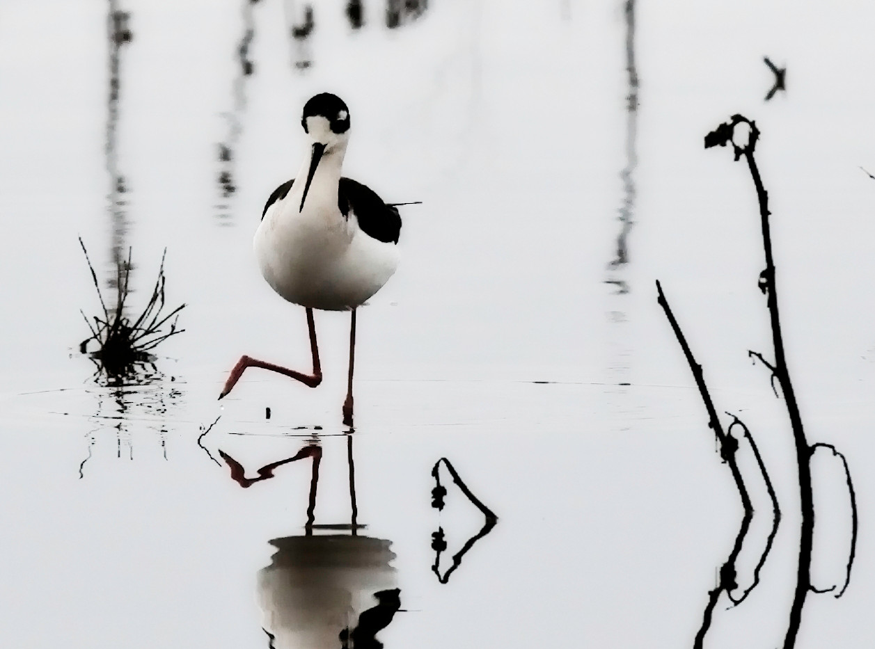 Bird Art.jpg