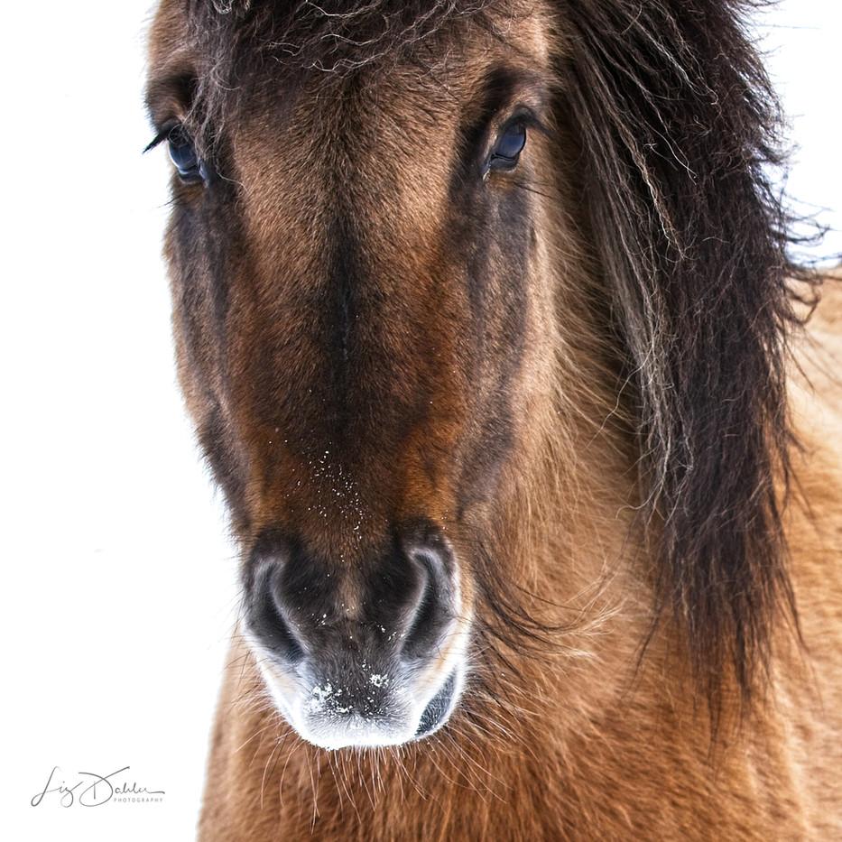 Chillin Horse