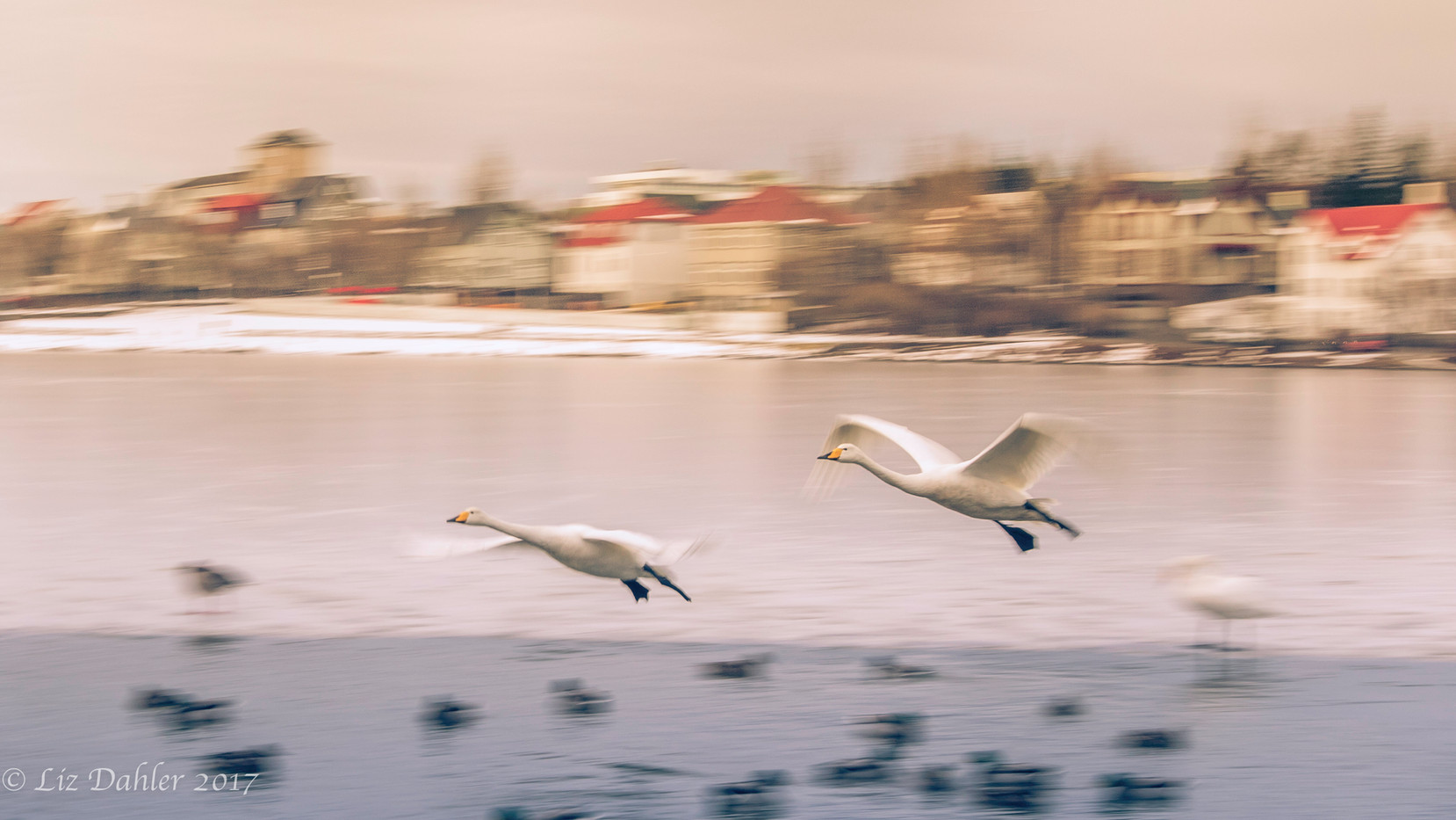 Ice Flight