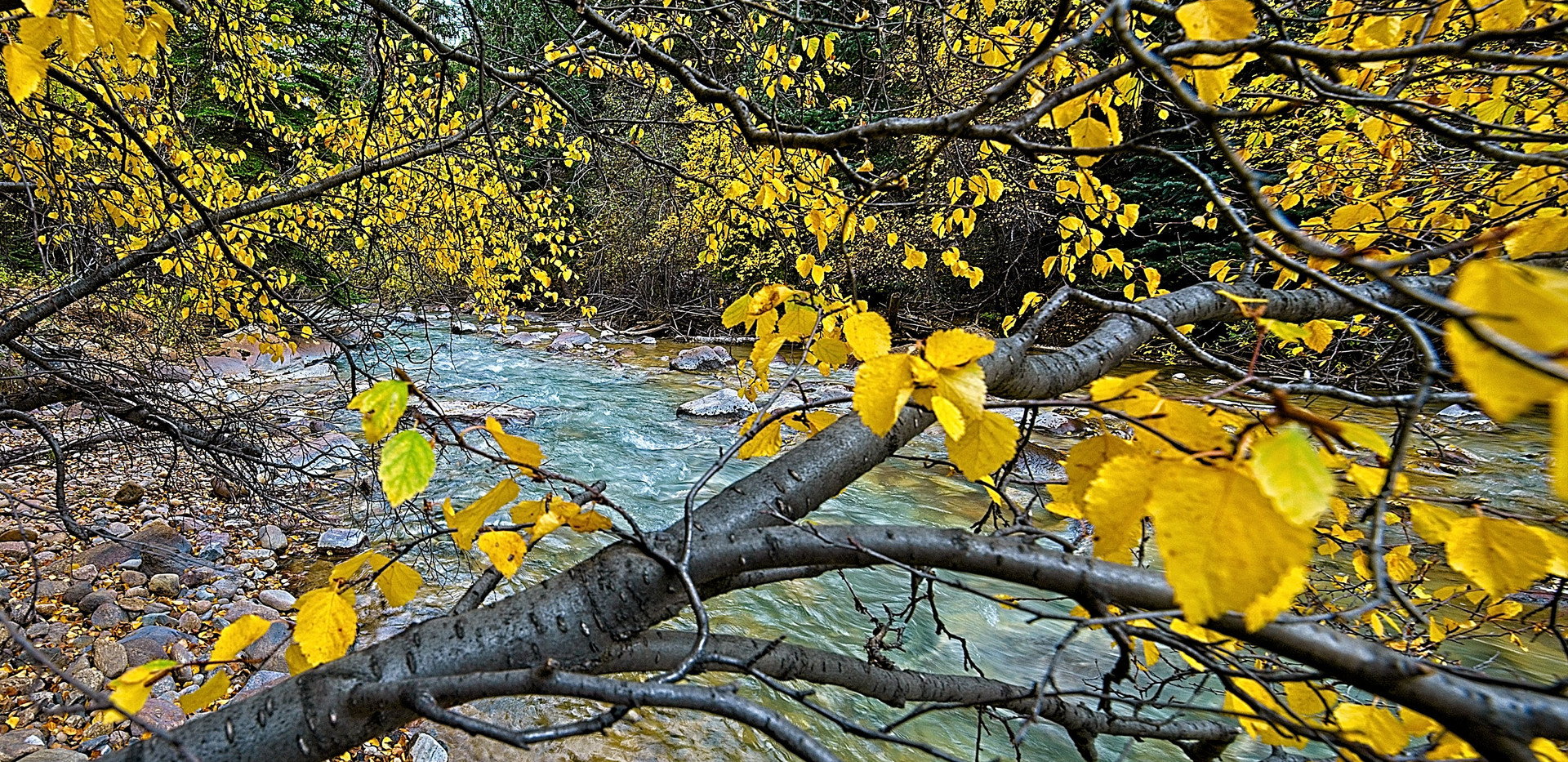 Stream in Yellow