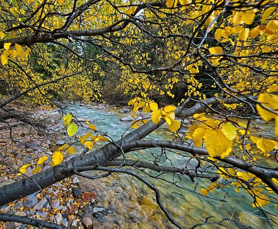 Stream in Yellow