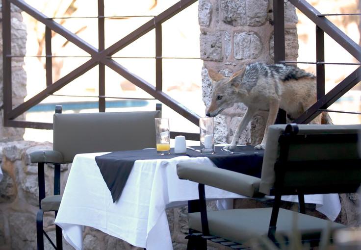 Namibia Jackal Breakfast Guest