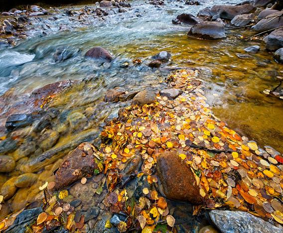 Streaming Leaves