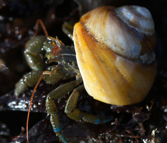 Crab Eyes