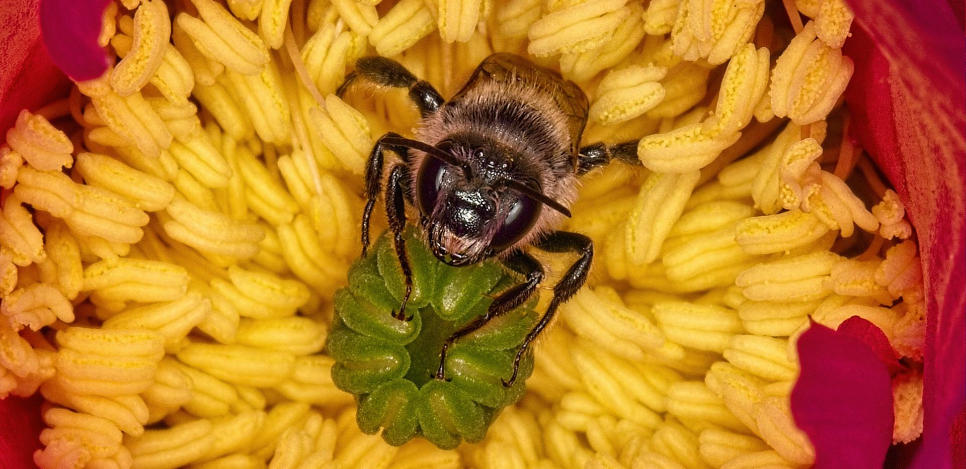 Angry_Bee_MG_8795.jpg