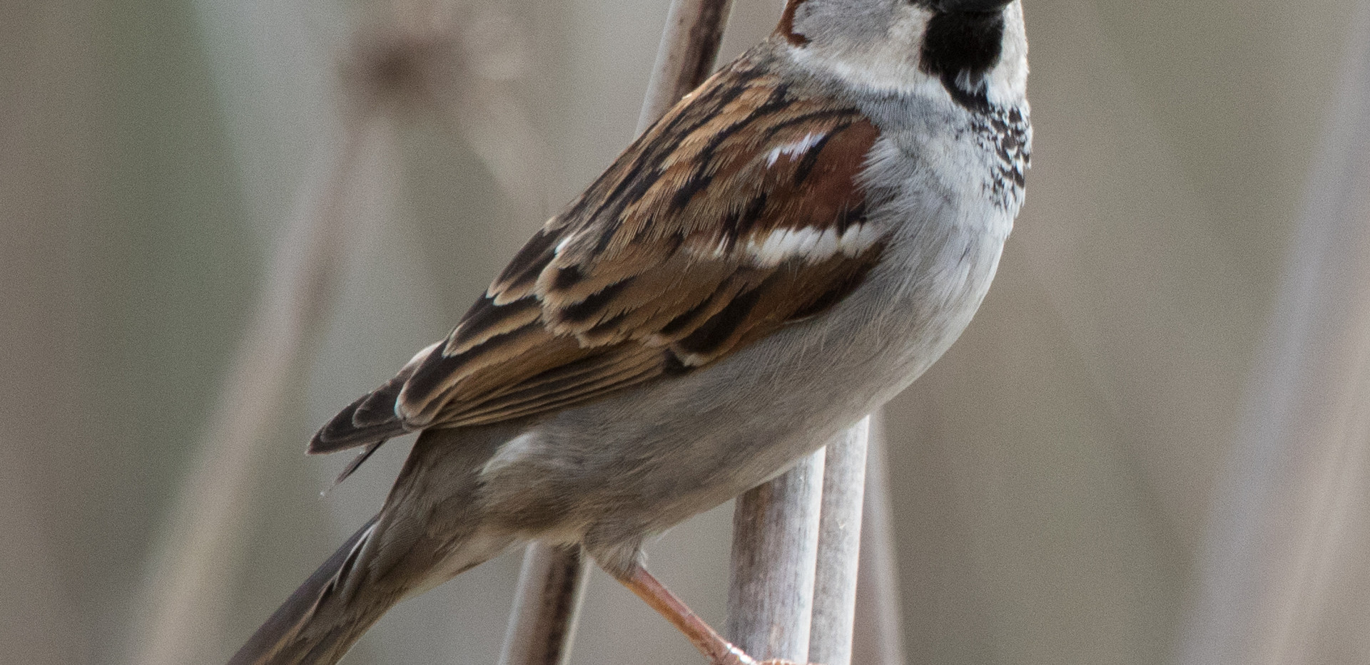 20160228 Sac Wildlife Refuge-3882 bird.j