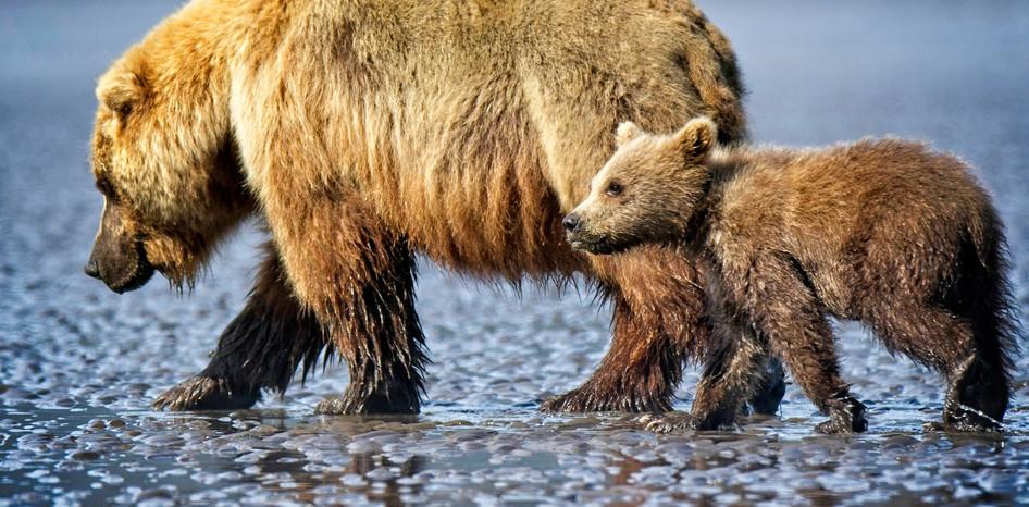 Bearly Behind
