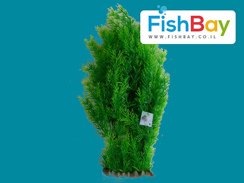 צמח לאקווריום גובה 50