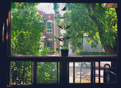WindowSwap