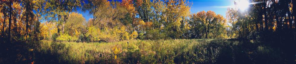 Ambient Autumn