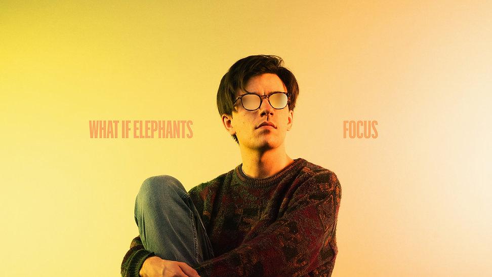 focus what if elephants3.jpg