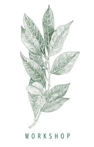 Laurel verde workshop.jpg