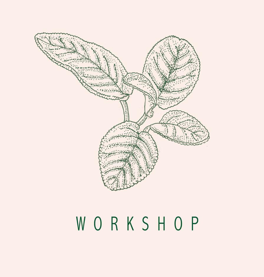 Salvia rosa workshop.jpg