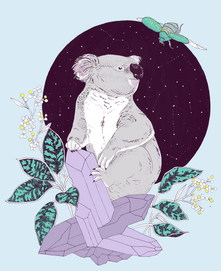 koala copia.png