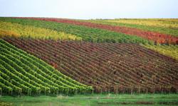 Bild Herbst (2).jpg