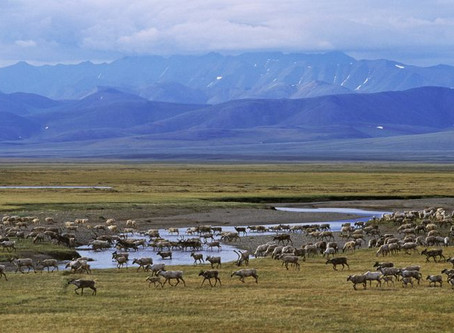 Open Arctic Refuge to Drilling: Anti-Science and Unethical?