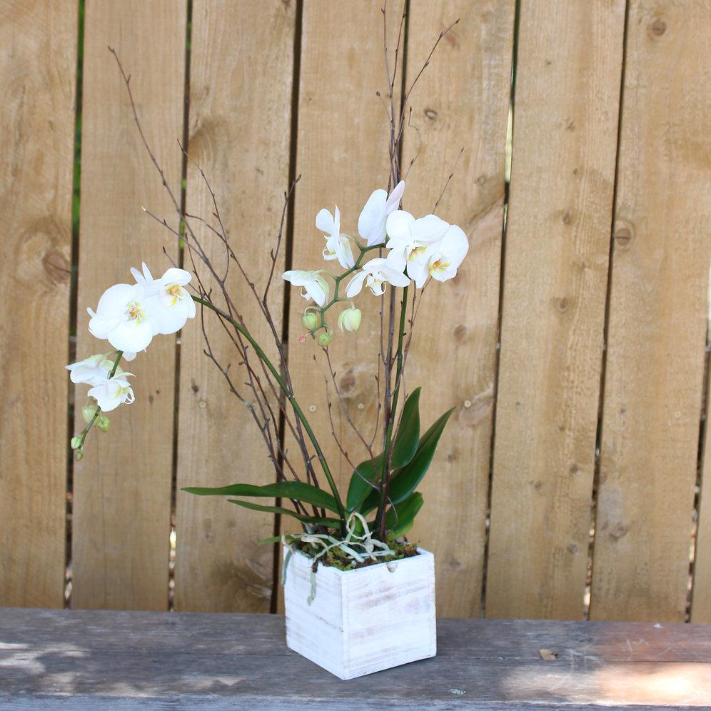 P19 005 An Empty Vase
