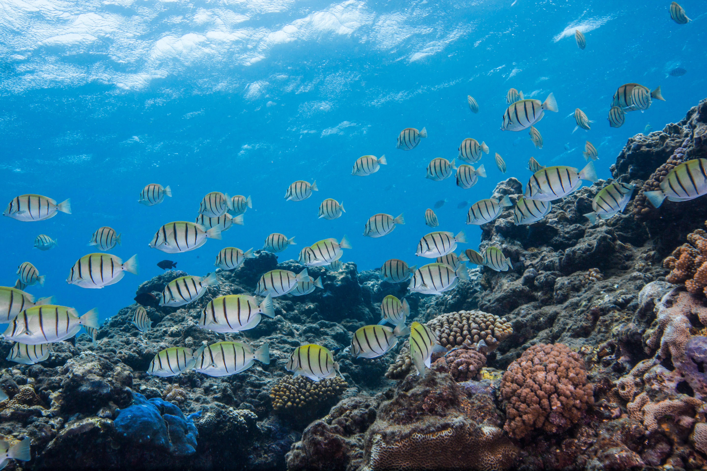 Band de poisson
