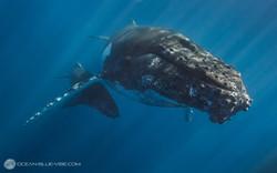 Baleine #3