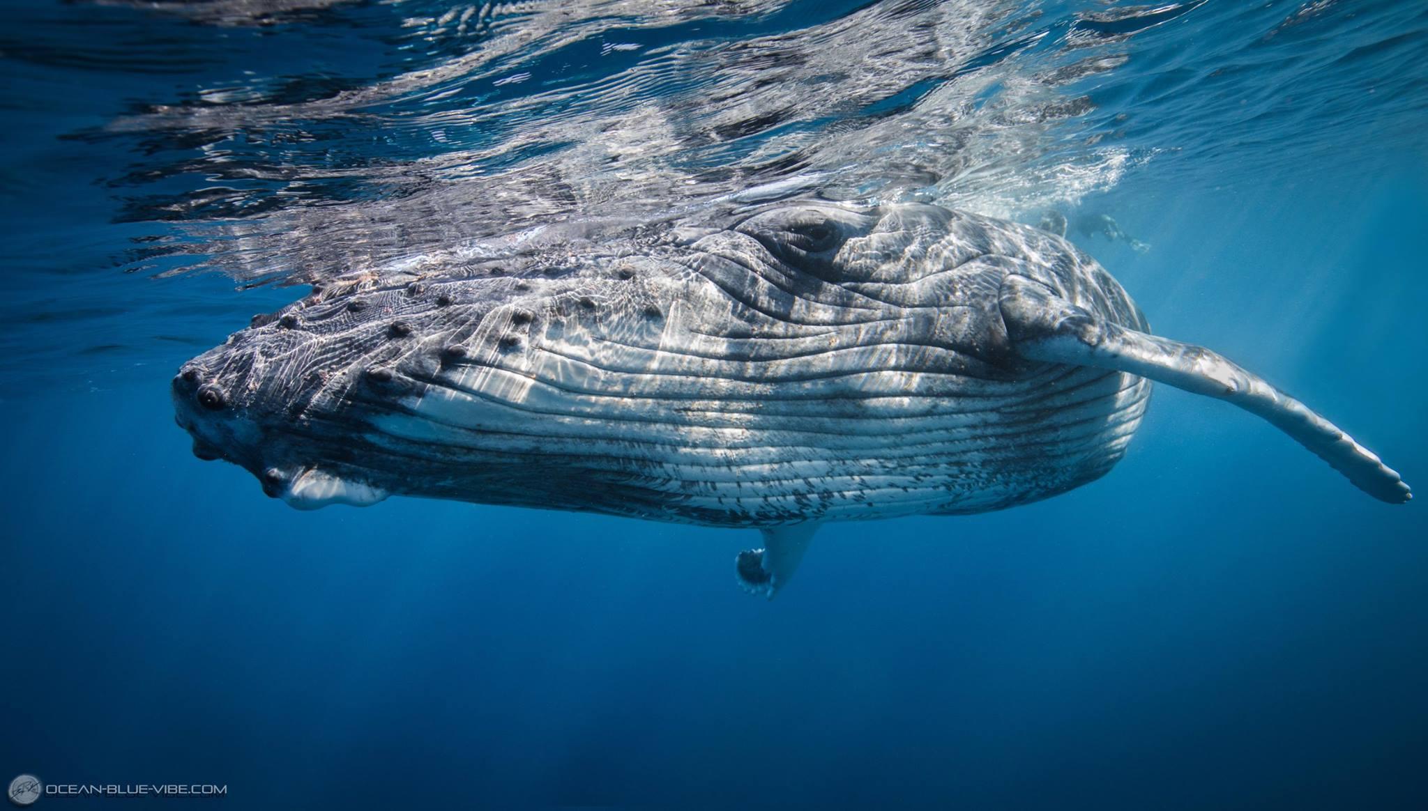 Baleine #2