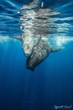 Baleine #1