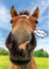 HORSE-hello.jpg