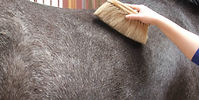 body-brush-grooming-1280x640.jpg