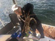 隐蔽海湾里的螃蟹硕大肥美