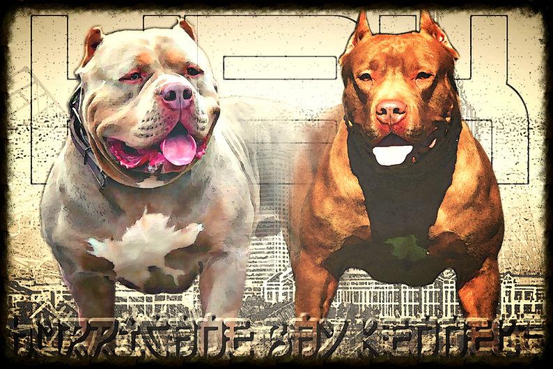 chocolate tri bully pups in Florida