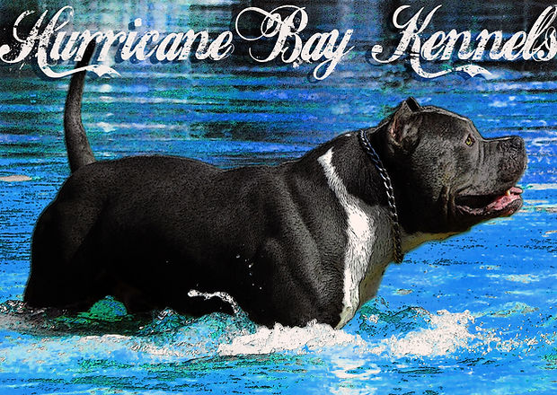 Hurricane Bay Kennels XL Pitbulls and Bullies