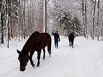 gemeinsame Wanderung im Schnee.jpg
